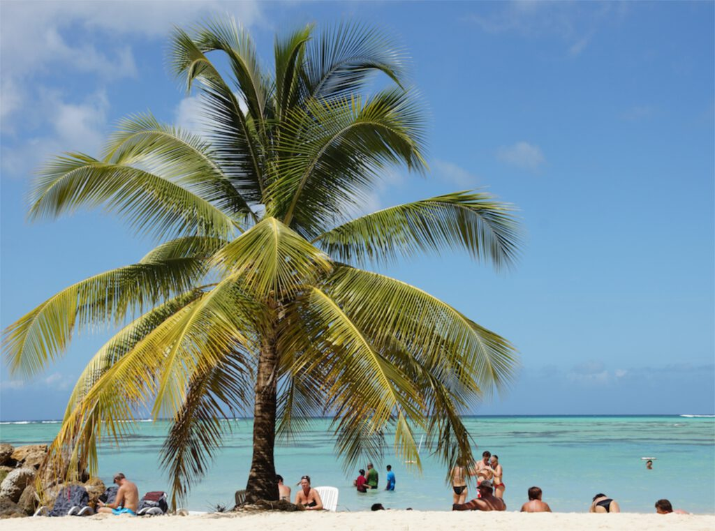 karibik strand und palmen